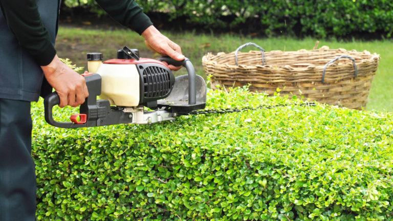 Gardener trimming hedge with trimmer machine in the garden
